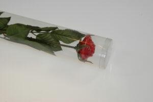 Roos in koker