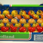 Hollands fruit