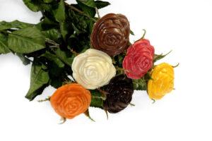 02-21043-Gekleurde-rozen